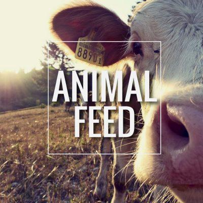 Animal-Feed5