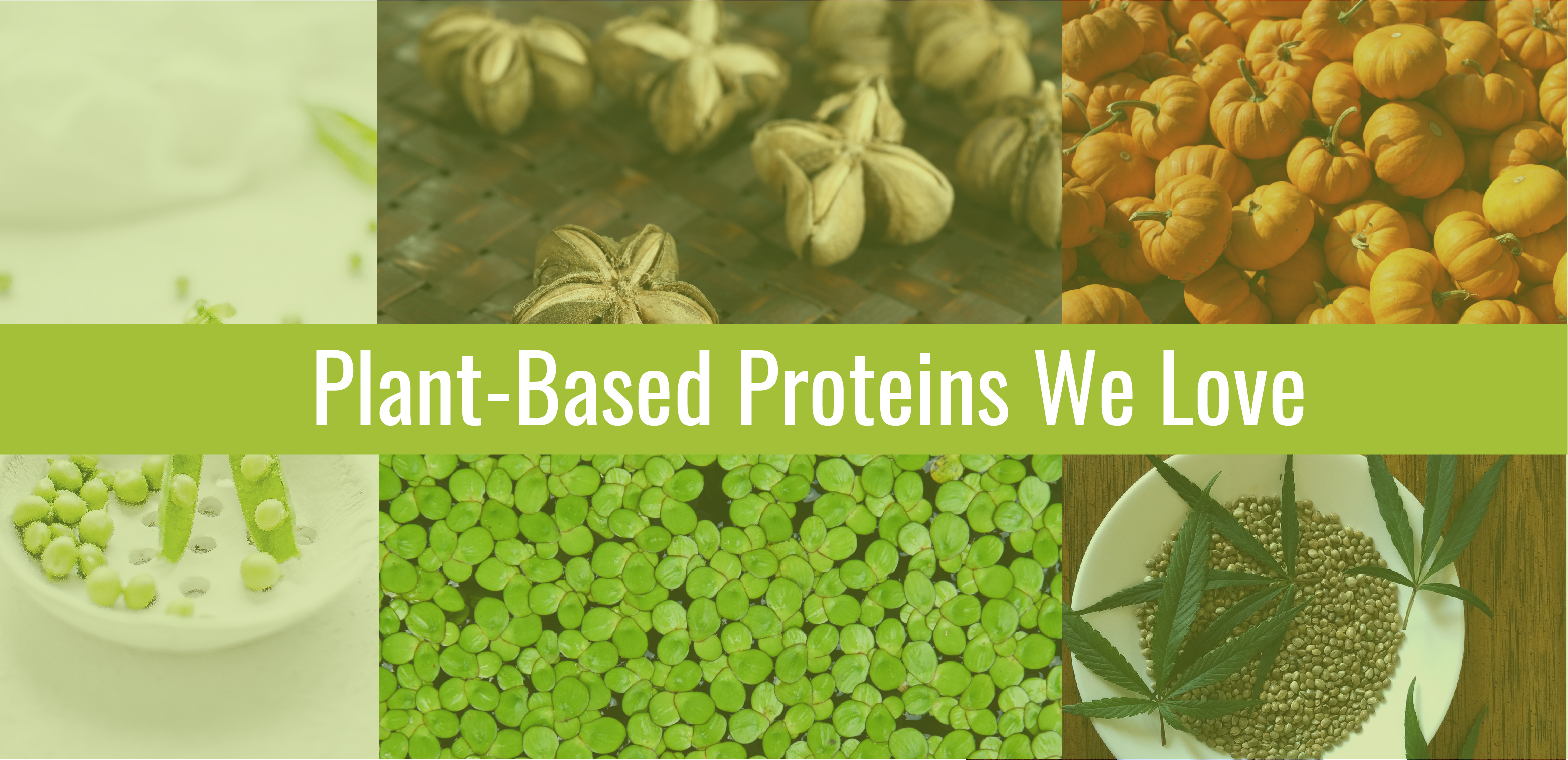Plant-Based Proteins We Love- images of peas, water lentils, hemp, sacha-inch, and pumpkins