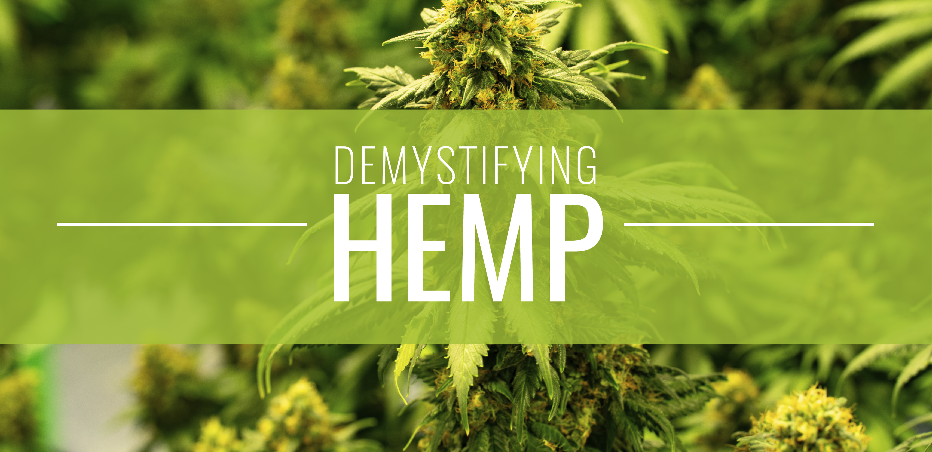 De-mystifying hemp