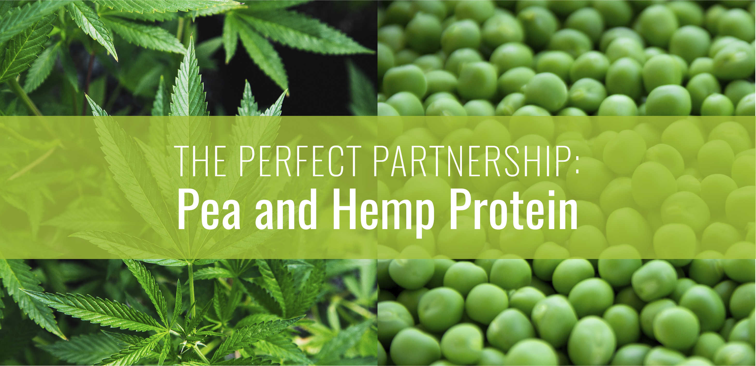 "Image of a Cannabis plant and green peas overlaid with a green bar and the words ""The perfect partnership: pea and hemp protein"""