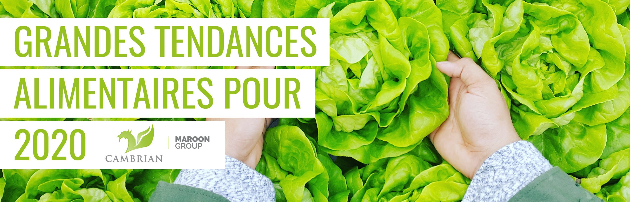 GRANDES TENDANCES ALIMENTAIRES POUR 2020 over two hands holding a head of lettuce among many other heads of lettuce